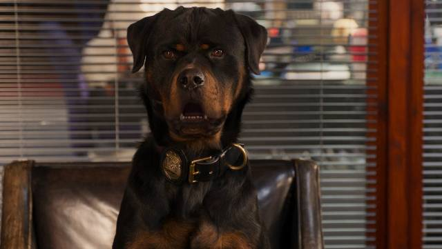 watch SHOW DOGS trailer