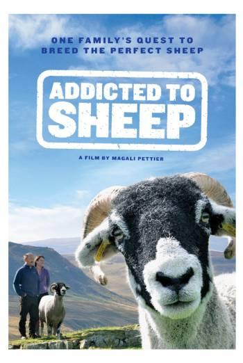 ADDICTED TO SHEEP <span>(2015)</span> artwork