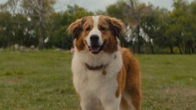 watch A DOG'S JOURNEY trailer